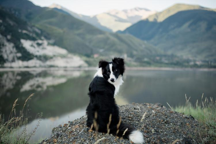 dog in lake district with mountains in the background