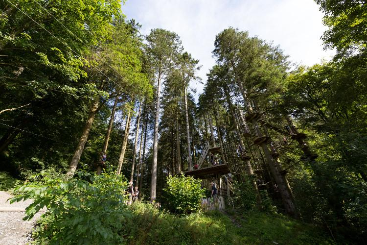 Treetop adventures in Grizedale Forest, Lake District