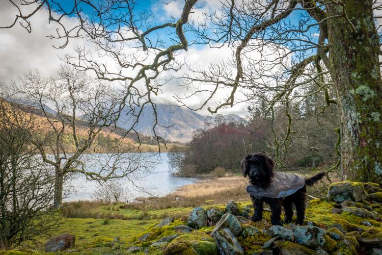 Little black dog at the side of Loweswater