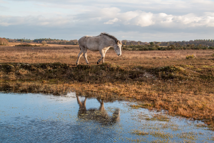 Embrace the beauty of the New Forest when it rains