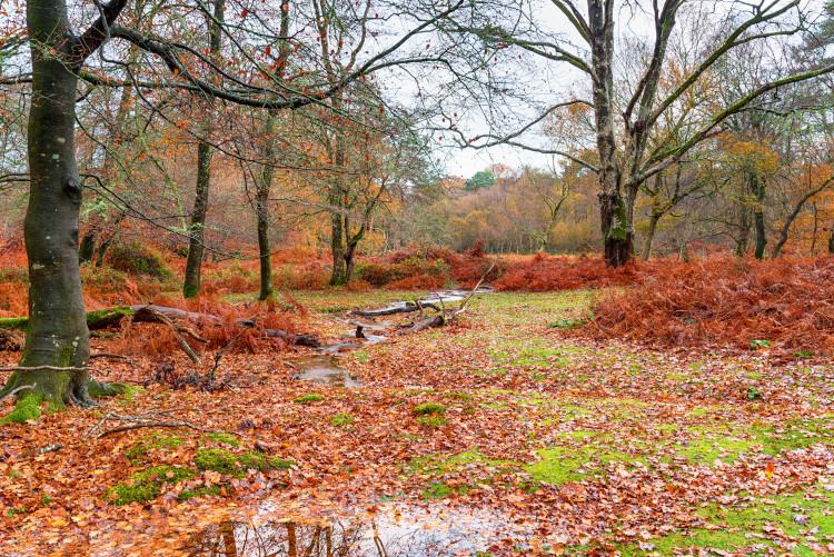 woods in lyndhurst