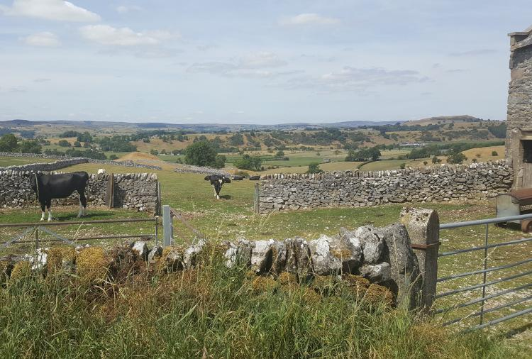 Countryside around Hartington