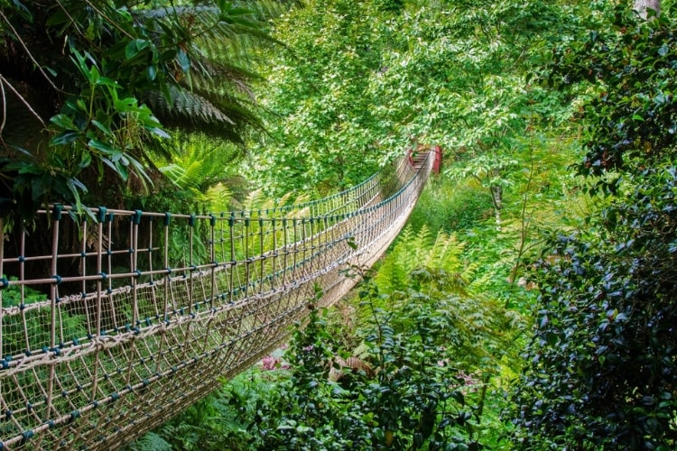 Lost Gardens of Heligan rope bridge