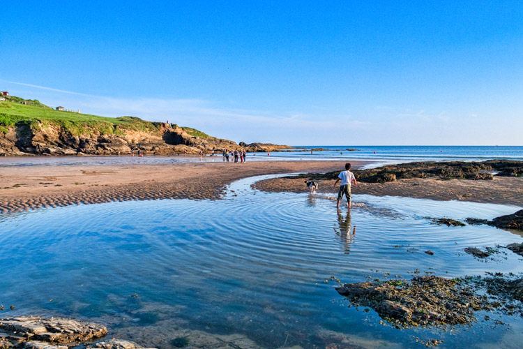 A dog-friendly beach in Cornwall