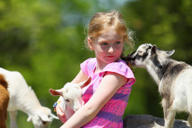 Girl with farm goats