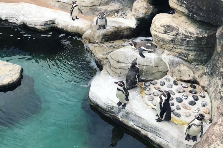 Gweek Seal Sanctuary Cornwall
