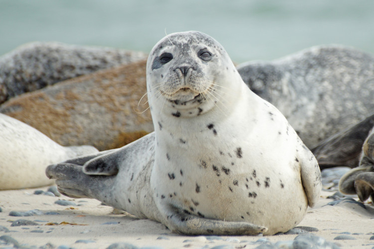 The Cornish Seal Sanctuary in Gweek, Cornwall