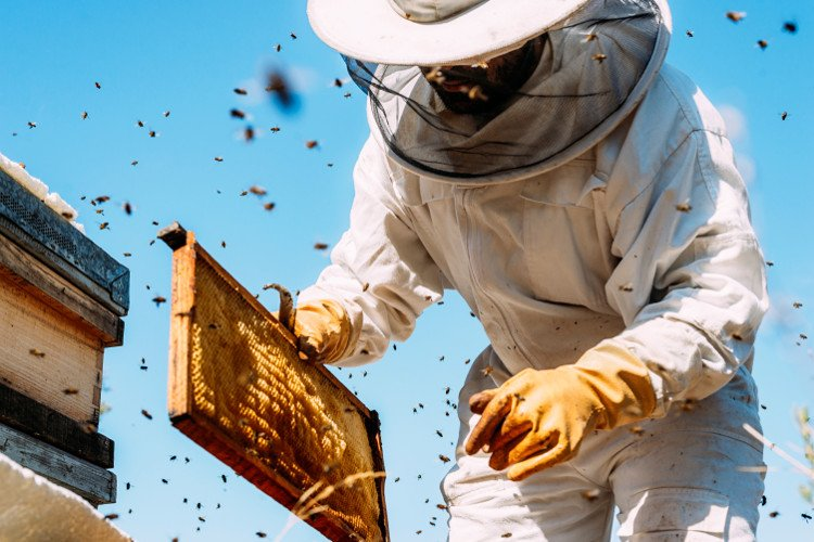 bees and beekeeper