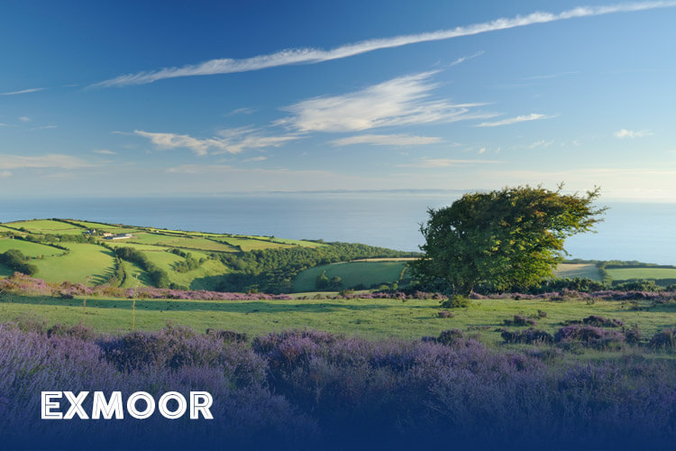 A local's guide to Exmoor