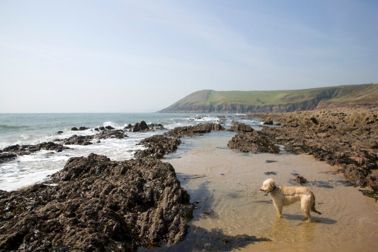 Pembrokeshire dog-friendly beaches