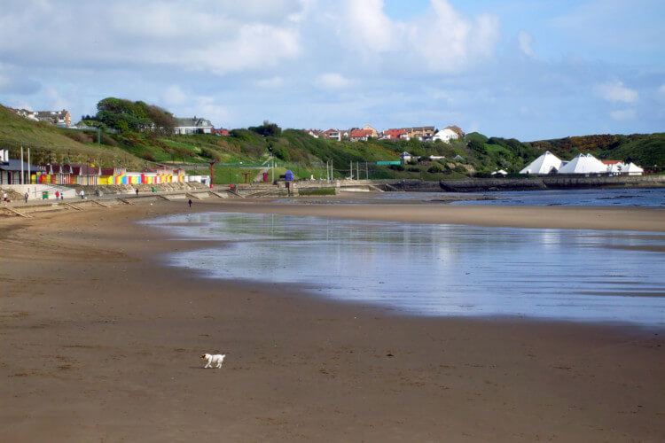 Dog-friendly Scarborough North Bay