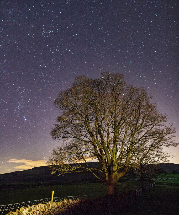 Starry night sky in the Yorkshire countryside with a tree in the foreground