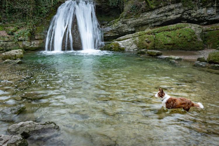 Dog in waterfall