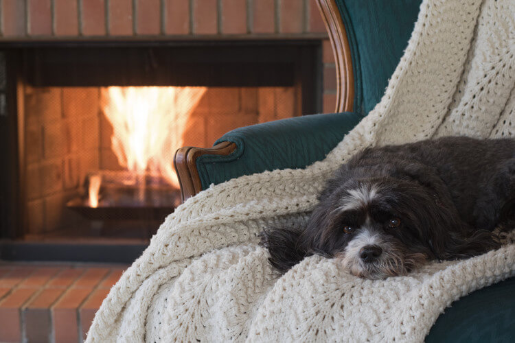 Dog in cottage