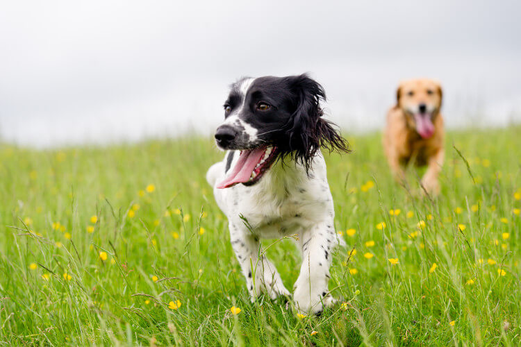 Dog walks in Yorkshire