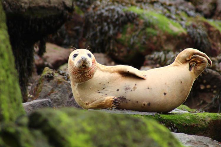 Yorkshire Coast guide - wildlife