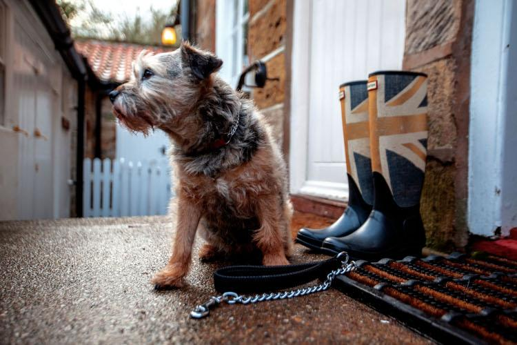 Book a dog-friendly Yorkshire holiday