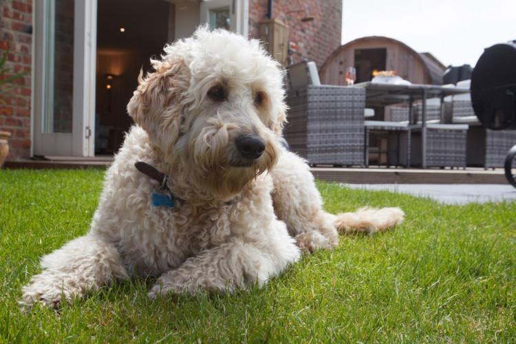 Dog-friendly Yorkshire holiday