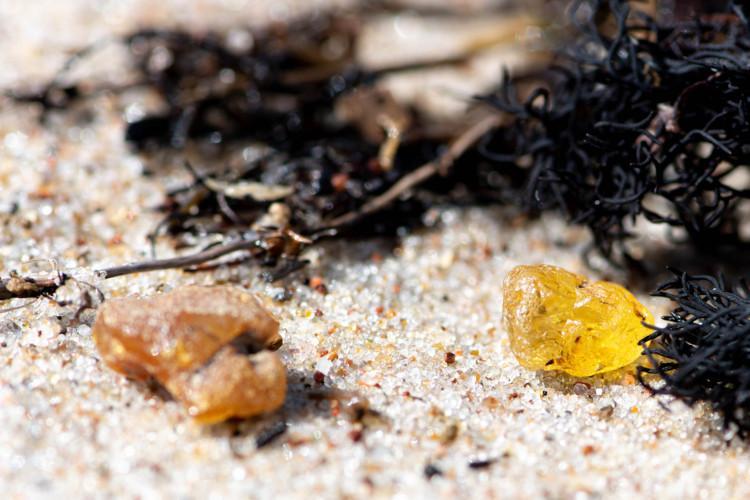 Amber on the beach
