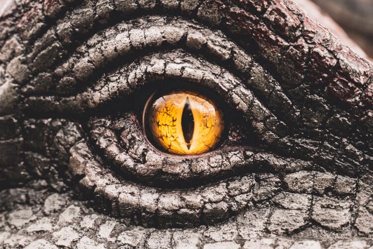 Eye of a dinosaur - see them at The Dinosaur Park, Tenby