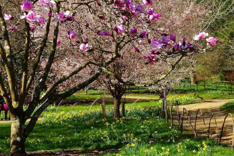 Romantic garden - Batsford