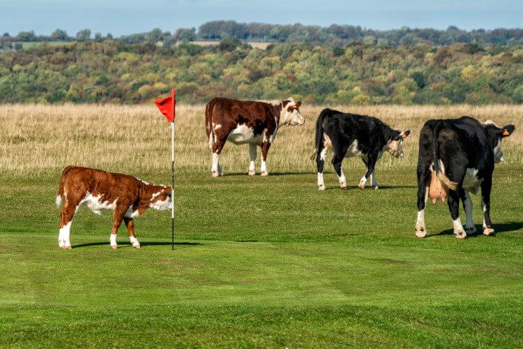 Minchinhampton Old Golf Course