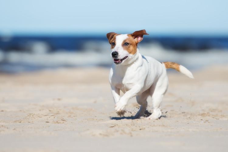 Dog-friendly Norfolk