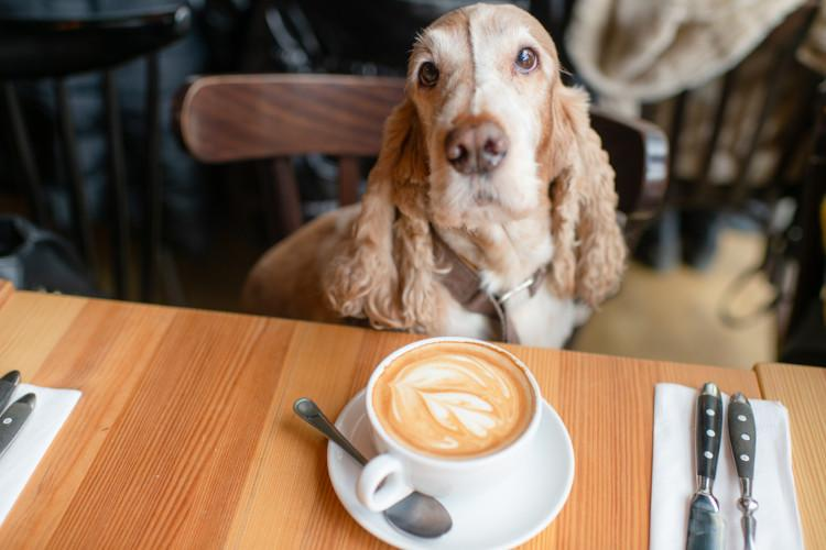Dog-friendly pubs and cafes