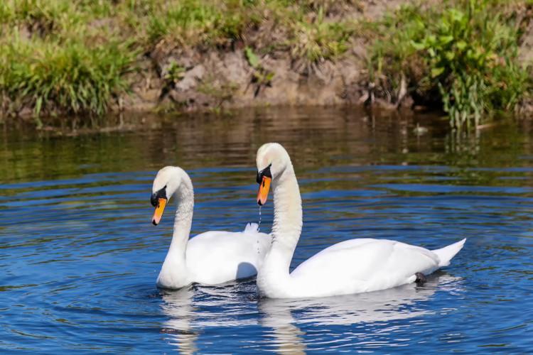 Wildlife in the Norfolk Broads
