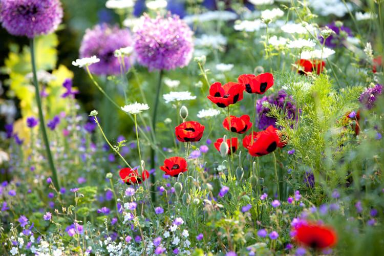 Norfolk gardens guide