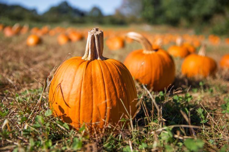 Best PYO pumpkin farms UK
