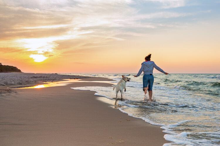 Take your dog to a devon beach