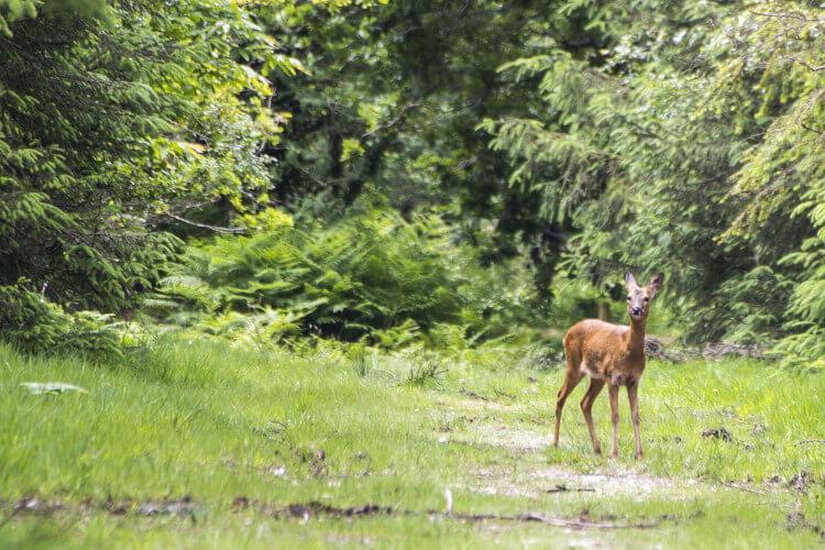 Haldon Forest Park, Exeter