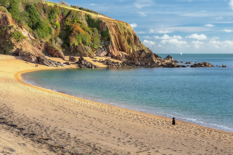 A dog-friendly beach in Devon