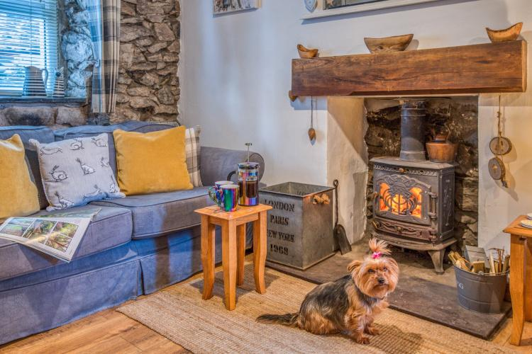 Dog at The Llyn Retreat