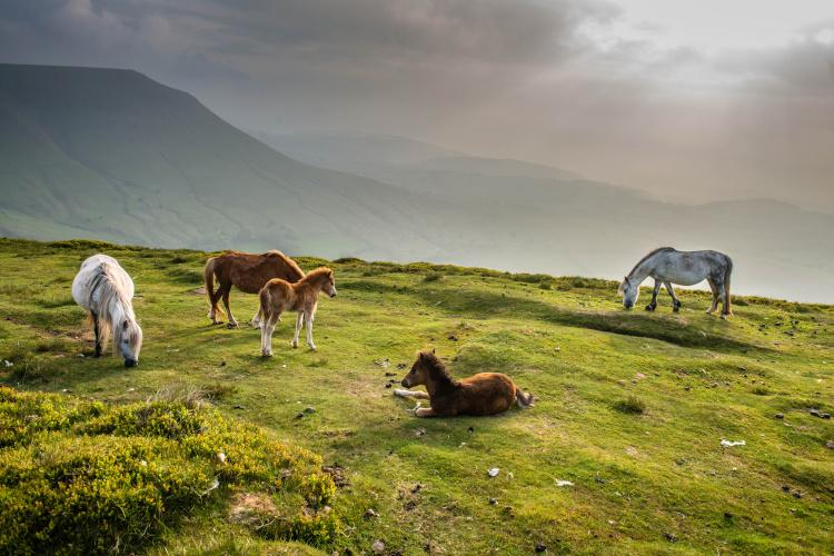 Horses in the Brecon Beacons