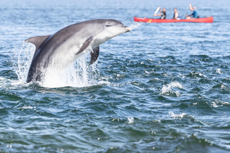 Dolphin spotting in Scotland